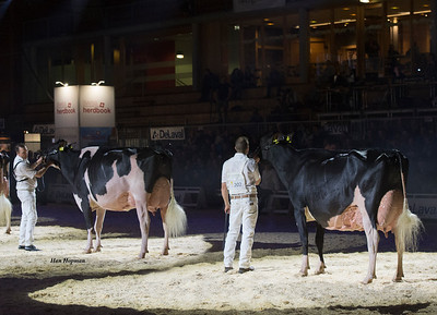dh_Gold_chip_darling_rogy_goldwyn_ghardaia_400