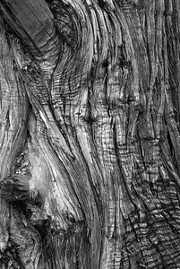 Juniper tree close up.  The light was great and really made the texture of the bark stand out.