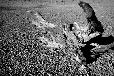 Stranded piece of wood in the desert.