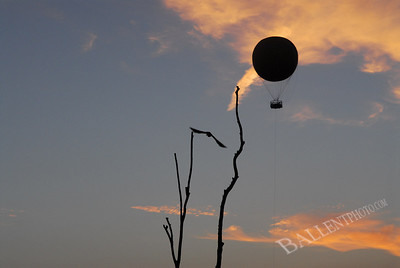 Bird taking off from perch during sunset with observation ballon in the background.