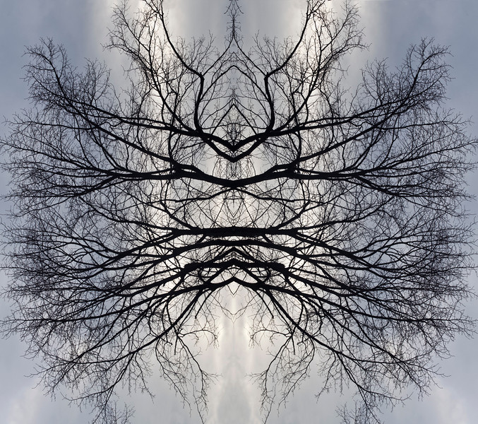 Tree reflection 3
