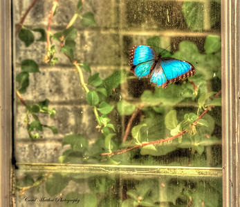 Butterfly wants to be Free