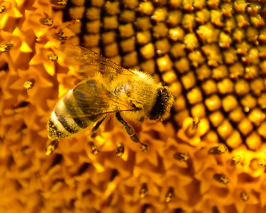 Busy as a     well    bee