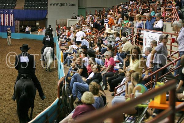 Classic Fino Stallions Championship