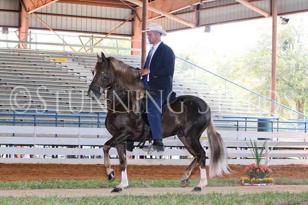 119 Pls Stallion Championship