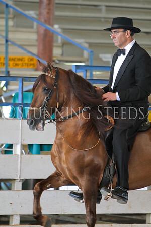 127 Performance AO Stallions
