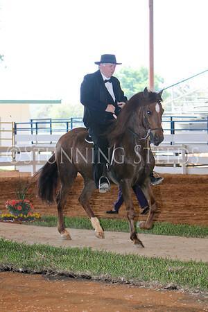 130 Performance AO Stallion Gelding Championship