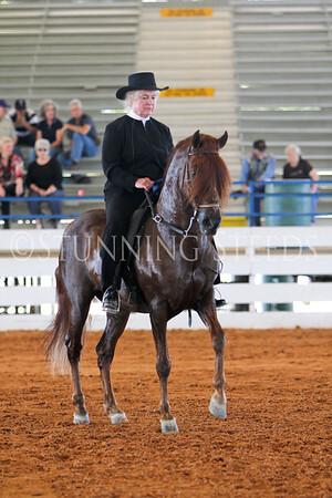 138 Fino AO Stallions