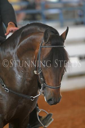 152-153 Performance Stallions & Geldings