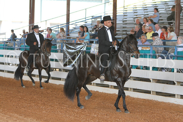 156  Performance Stallion Championship
