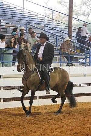 176 Fino Stallions