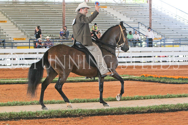 173 PLS MARE FILLIES CHAMP