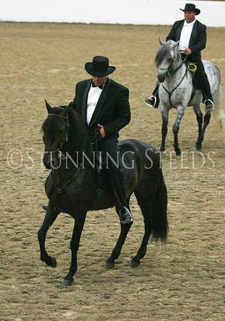 Fino Stallions & Championship