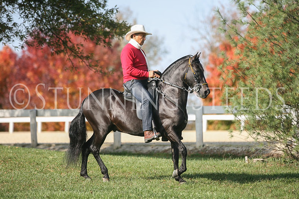 2012 PFHA Grand National Show-Kentucky