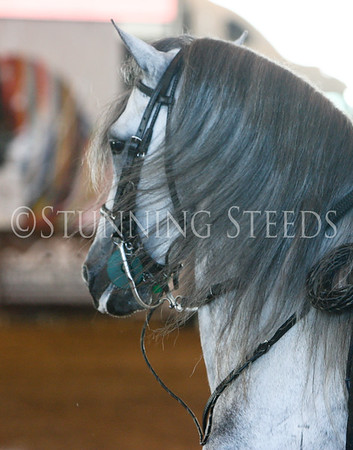 147 Pleasure Stallions