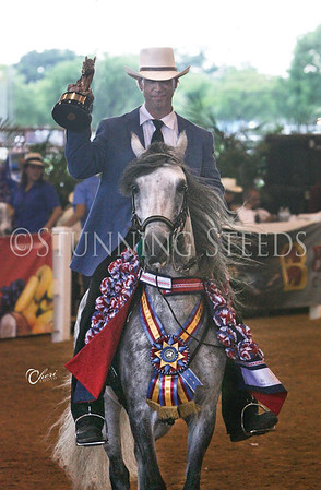 174-pleasure stallion championship