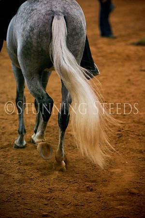 Fino Stallions Championship