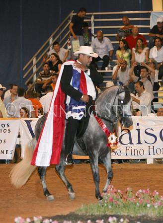 SATURDAY Classic Fino Stallions