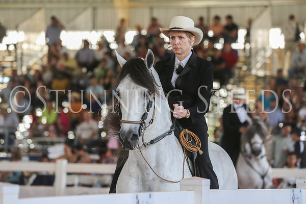 129-AO Performance Stallion Championship