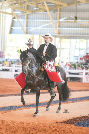 137-Performance Stallion Championship