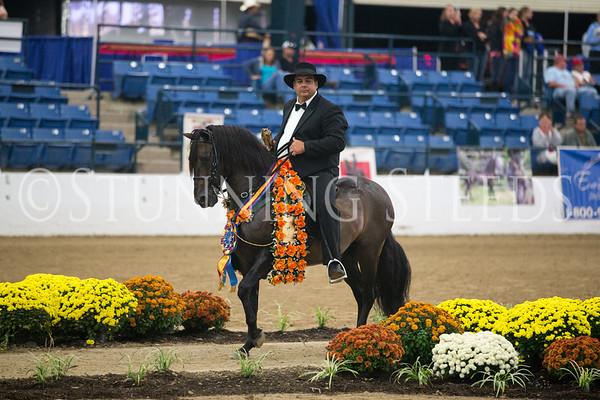 2013 PFHA Grand National Show KY