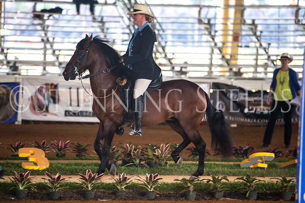 AO Pleasure stallions Championship