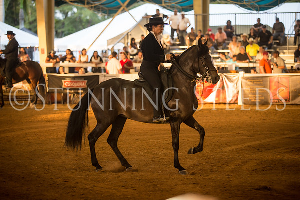 Performance Fillies & Mares Championship