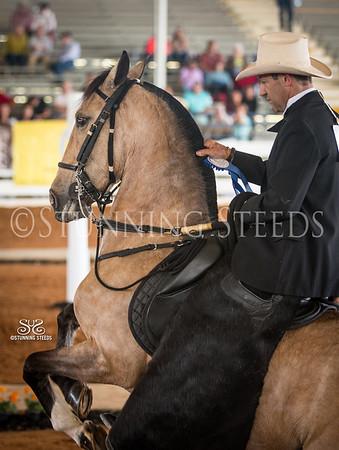 2014 Ocala Classic Paso Fino Horse Show