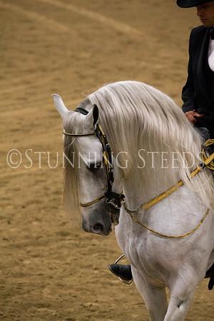 Fino Stallions