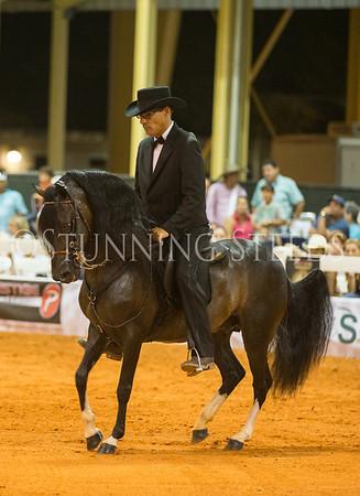 Sat-Fino Stallions