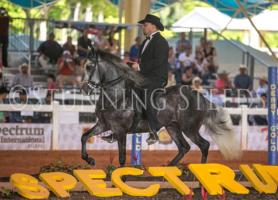 Sun-AO Performance Stallion Championship