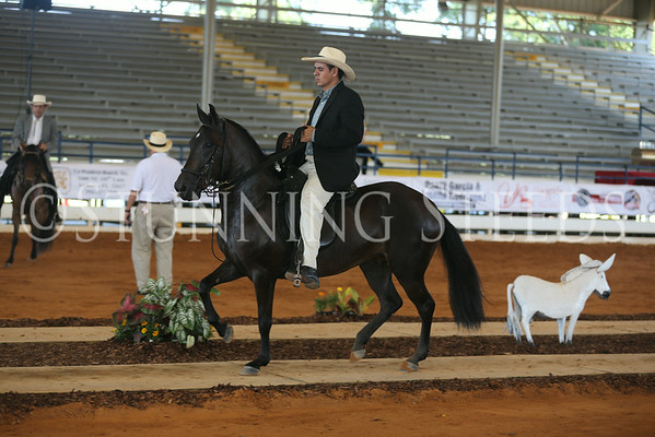 105.205 Pleasure Schooling Fillies 3y (2011)