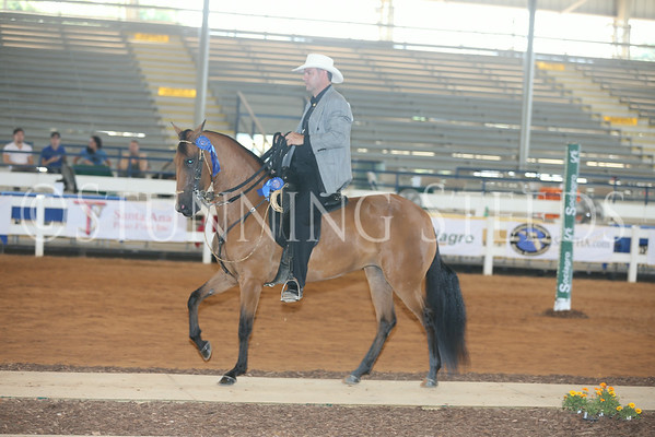 106.206 Pleasure Schooling Fillies 4y (2010)