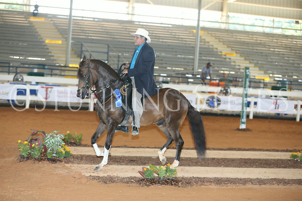 114.214Pleasure Geldings