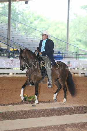 127.227Pleasure Championship Geldings