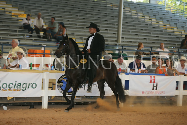 156.256Performance Championship Geldings