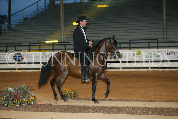 159.259Fino Schooling Fillies  3y (2011)
