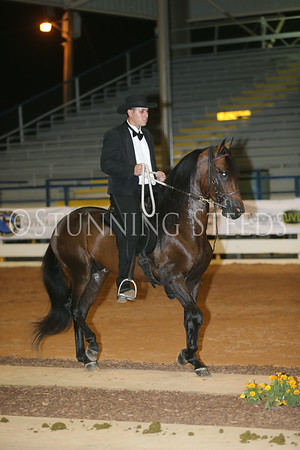 162.262Fino School ColtsGeldings 4y (2010)