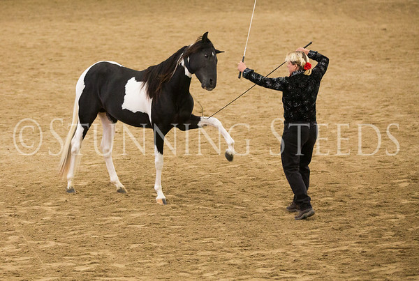 2015 PFHA Grand National Show-Lexington KY