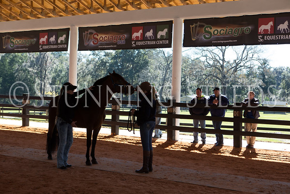 2015 Paso Fino Judges & Stewards Clinic