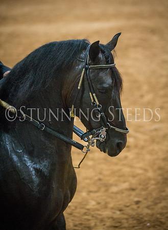 JR Fino Stallions