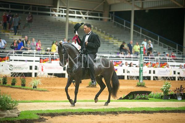 Senior Fino Stallions