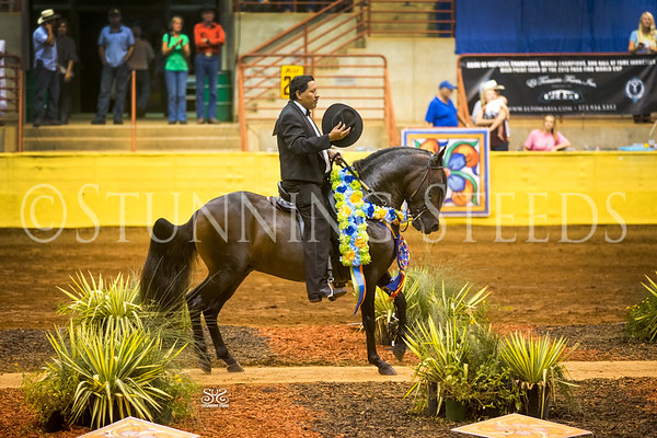2016 PFHA Grand National Show - Perry GA