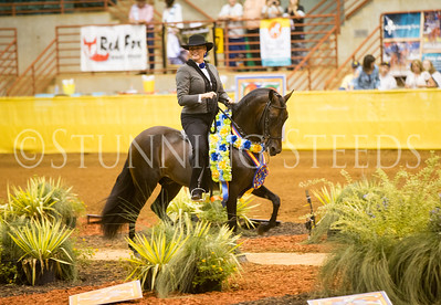 Performance Amateur Colt Stallion Championship