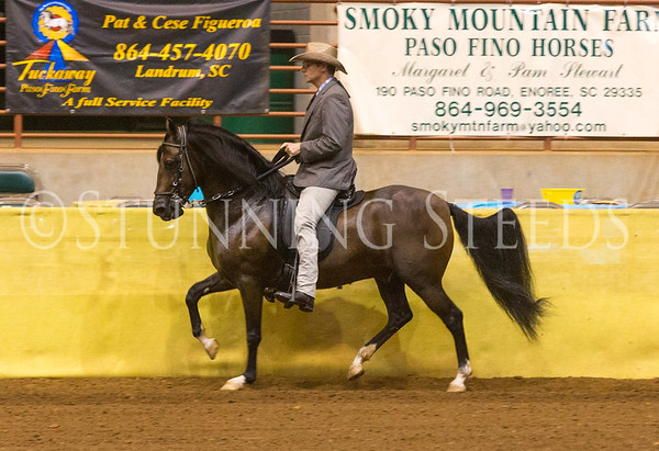 Pleasure Geldings 7 & over
