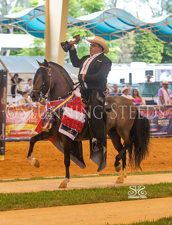 2016 Spectrum International Paso Show