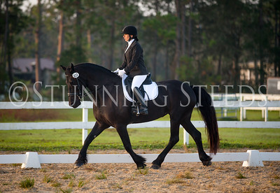 2017 New Smyrna Beach Friesian Keuring