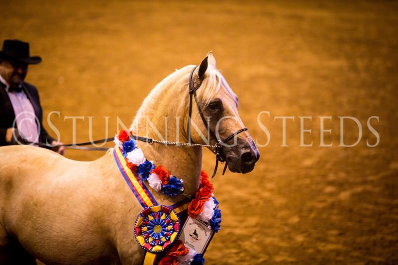StunningSteedsPhoto-HR-0819