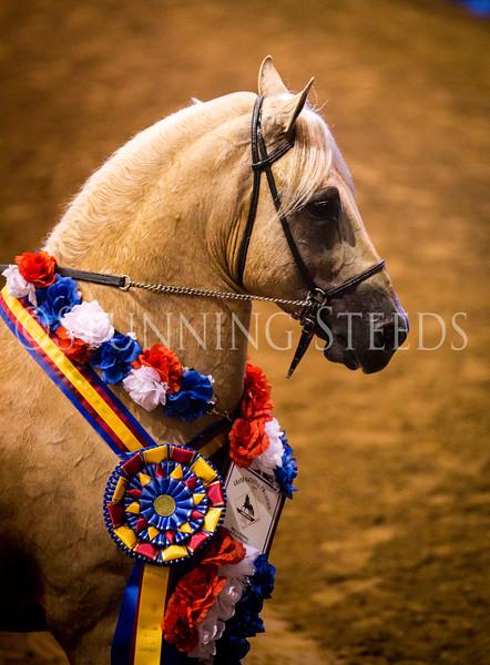 StunningSteedsPhoto-HR-0822