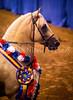 StunningSteedsPhoto-HR-0828